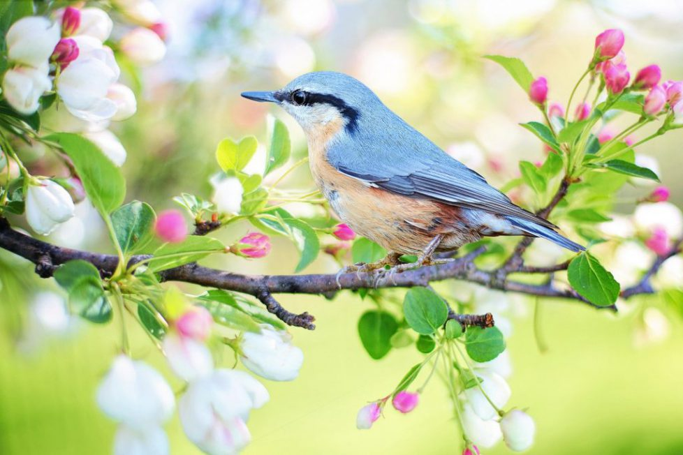 Who is an ornithologist?